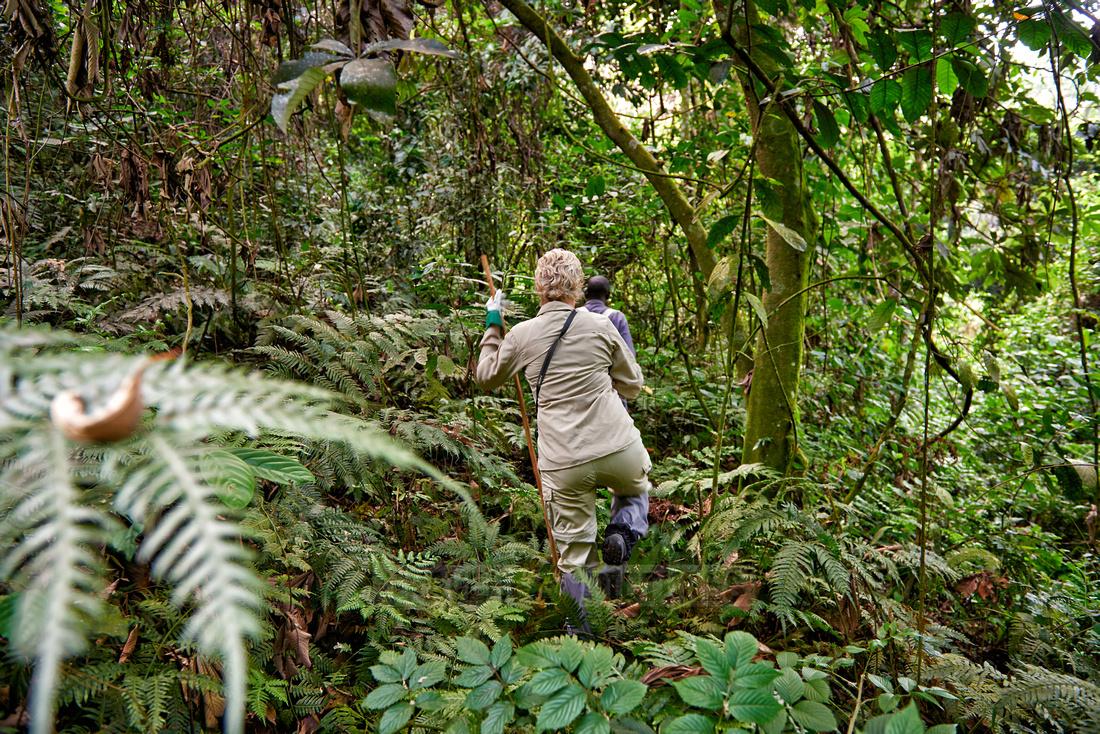 way thru the jungle at Gorilla trekking