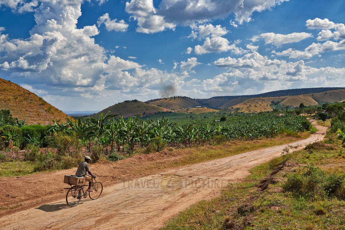 banana plantation near Lake Mburo