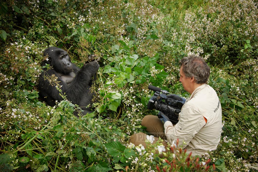 tourist with Mountain Gorilla