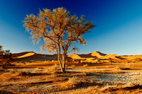 tree in desert landscape of Namib at Sossusvlei