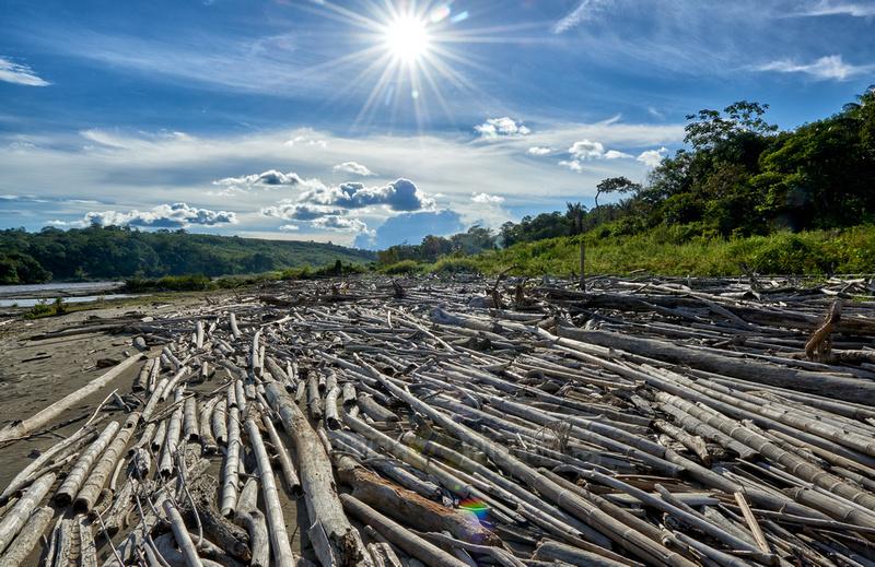 drift wood at Rio Guayabero