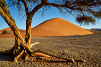 tree with dune 45, desert landscape of Namib