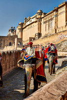 brightly painted Indian elephants bring tourists to the Amer Fort
