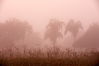 landscape with palms in morning mist