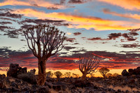 Quiver tree forest at sunset, Keetmanshoop 02-2018