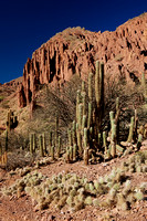 cacti and erosion landscape