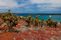 typical plants and landscape on Isla Plaza, Galapagos