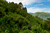 rainforest landscape on gorilla trekking