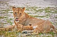 lioness with very young cub