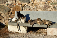 group of cats sitting  at Medieval fortress