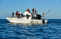cage diving boat with tourists waiting for the Great White Shark