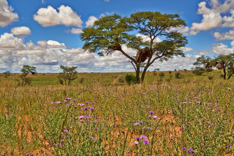 Landschaft im Kgalagadi Transfrontier Park |landscape in Kgalagadi Transfrontier Park|
