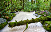 milky river in Great Bear Rainforest