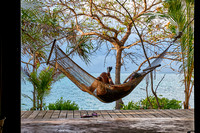 Hammock in front of palm trees and sea