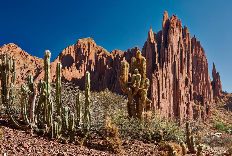 cacti and erosion landscape