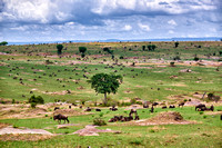 landscape in Serengeti National Park
